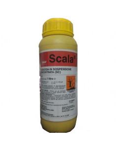 SCALA LT.1 miglior prezzo