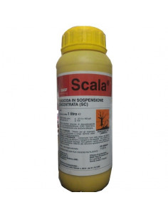 SCALA LT.1