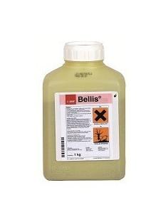 BELLIS KG.1