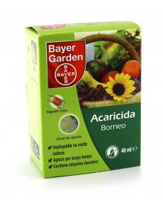 BORNEO ML.40 vendita online
