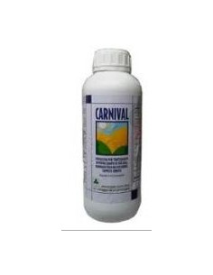 CARNIVAL RIO Lt. 1 vendita online