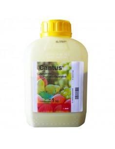 CANTUS KG.1 miglior prezzo
