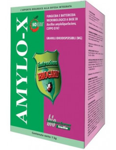 AMYLO-X KG.1 vendita online